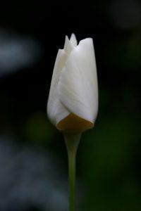 12von12, Juni 2018, Blumen, Bild 10